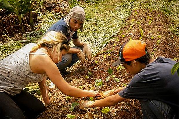 estágio agrícola do 11º b - Colégio Micael Ação Social