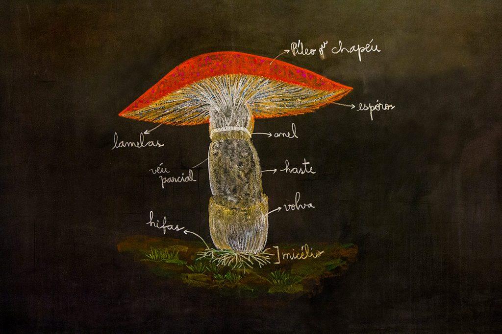 lousa de professora do 5º ano botânica - Colégio Micael Ensino Fundamental