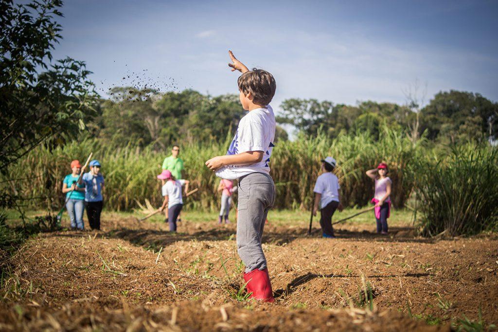plantio de trigo do 3º ano - Colégio Micael Ensino Fundamental