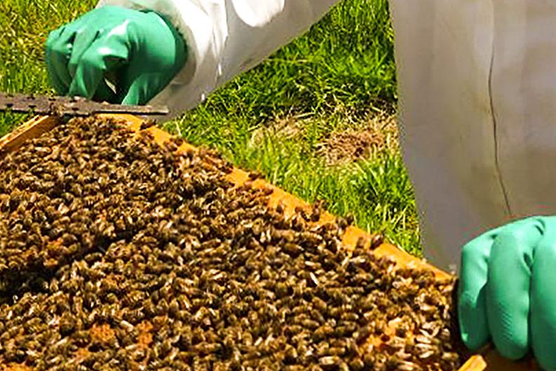 vivência de apicultura do 11º b - Colégio Micael Ação Social